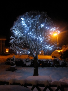 Lights on a garden tree