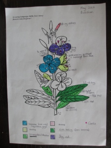 Language learning flower