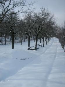 Brno in the snow - walk from Vinohrady to Stara Osada