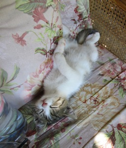 One of two kittens entertaining us when we weren't dancing flamenco :)