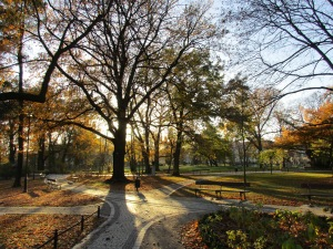 Autumn sunlight in the park by the Philharmonia