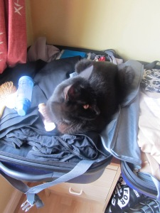 A black cat sitting on a half-packed suitcase