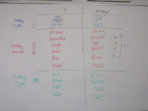 Singular and plural table of Polish nouns on whiteboard