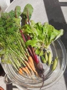 Carrots, beetroot and courgettes - all very tiny with lots of greenery